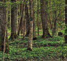 Parque nacional de Bialowieza